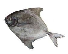 هرمز ماهی
