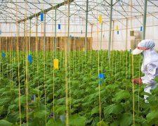 شرکت پیام آوران طبیعت سبز مشاور ، طراح و مجري گلخانه هاي مدرن