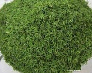 خرید و فروش عمده سبزی شوید خشک(شرکت پایار تجارت زمردین)