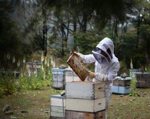 هنگی بی بازار آنلاین عسل